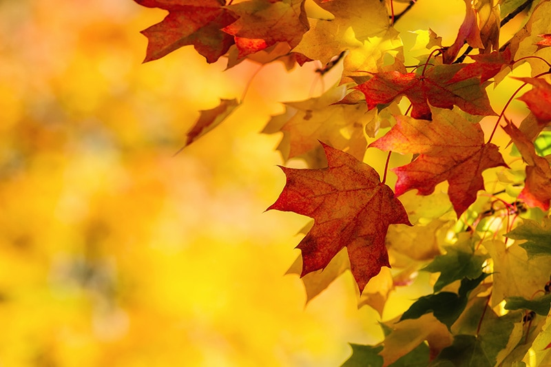 Fall leaves against an orange background, How Do I Get My Furnace & Heat Pump Ready for Winter?   Dana's